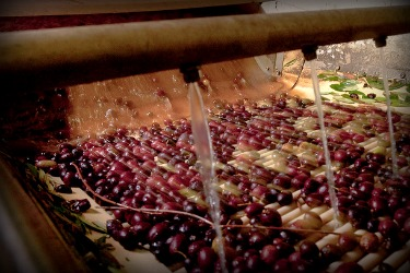 blog-olive-washing.jpg