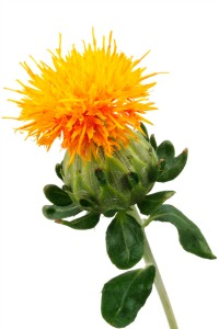 Safflower Oil - GMO or non-GMO?