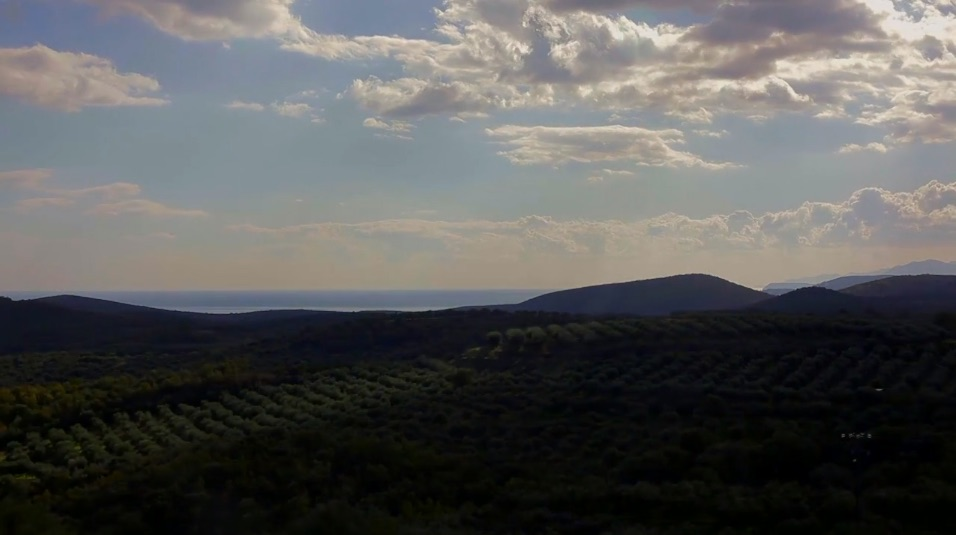 Olive Oil Fields Video