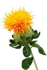 Safflower Oil, 35 Lb. Containers, buy online