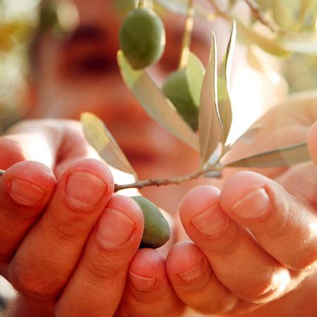 EVOO-health-benefits