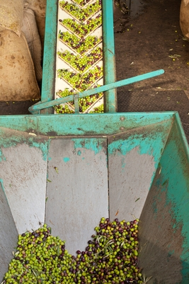 Olive Oil Manufacturing