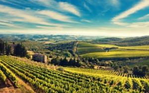Olive oil harvest | commodity market