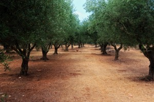 blog16-aisle-of-trees