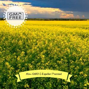 Non-GMO Expeller Pressed Canola Oil Exists