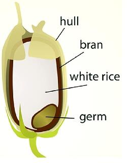 Rice Bran Graphic
