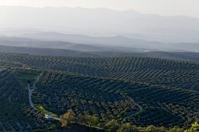 Low Price Olive Pomace Oil